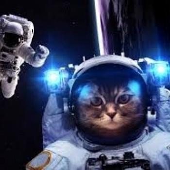 cat the astronaut