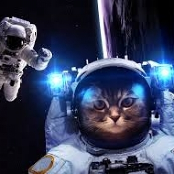 astronaut the cat