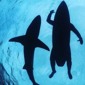 Atilla shark