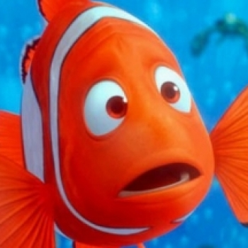 Kayıp Balık NEO