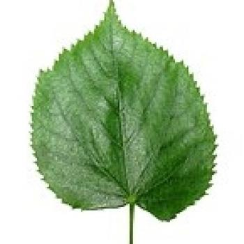 Yaprak Kafalar