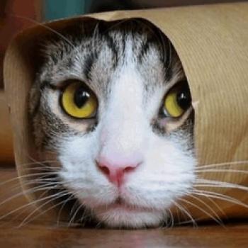 Kedi İsmail