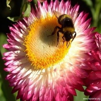 arı çiçek