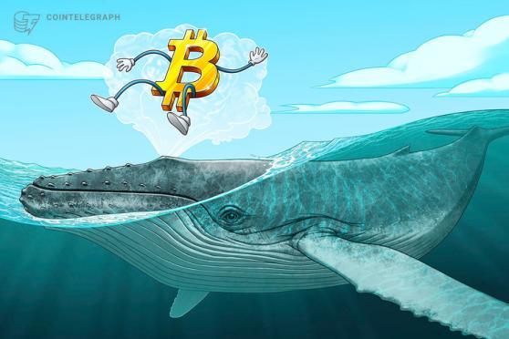 Bitcoin Cash Balinalarının Sayısındaki Düşüş Dikkat Çekti